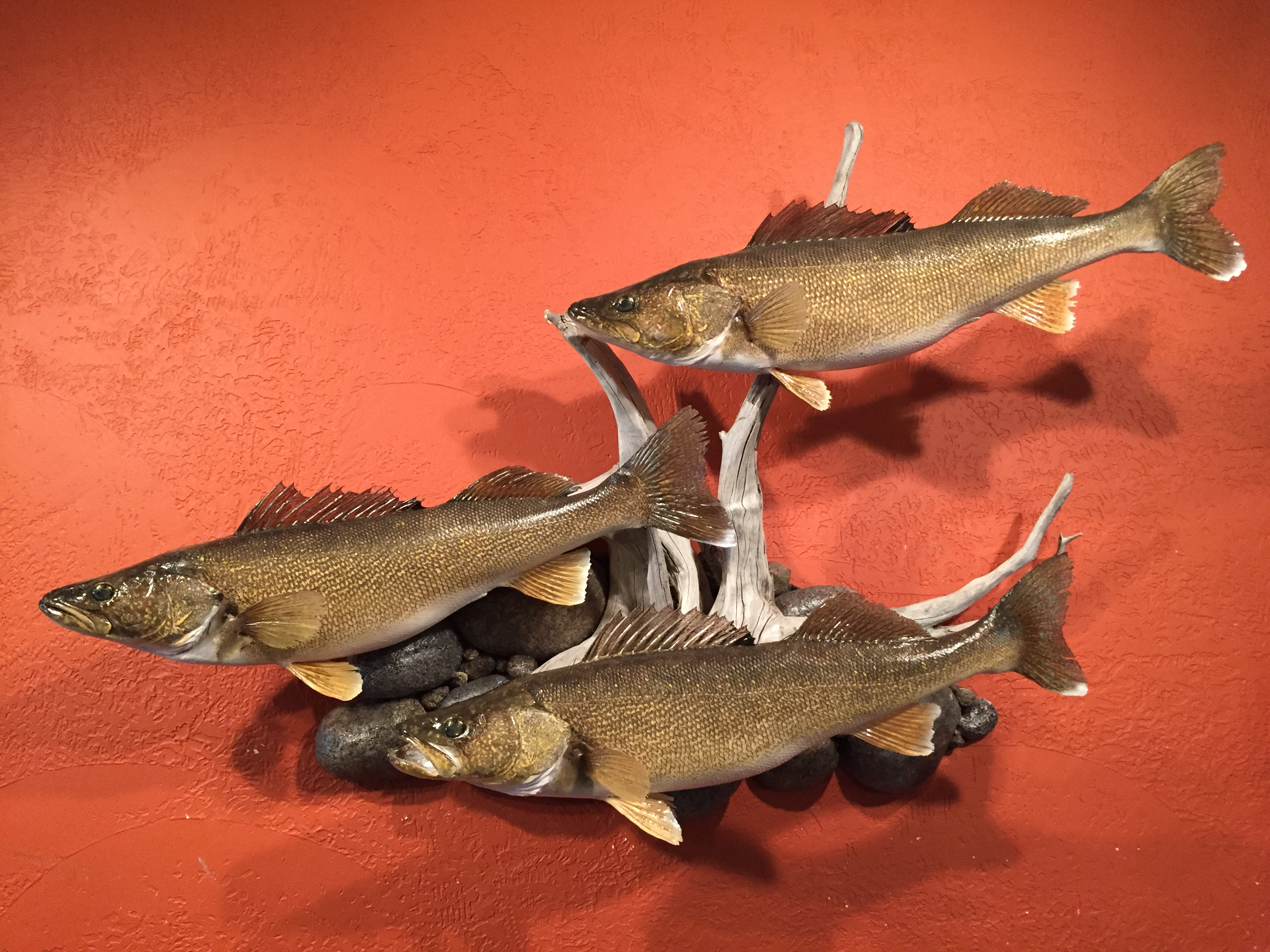 Fish sunram taxidermy for Fish taxidermy prices